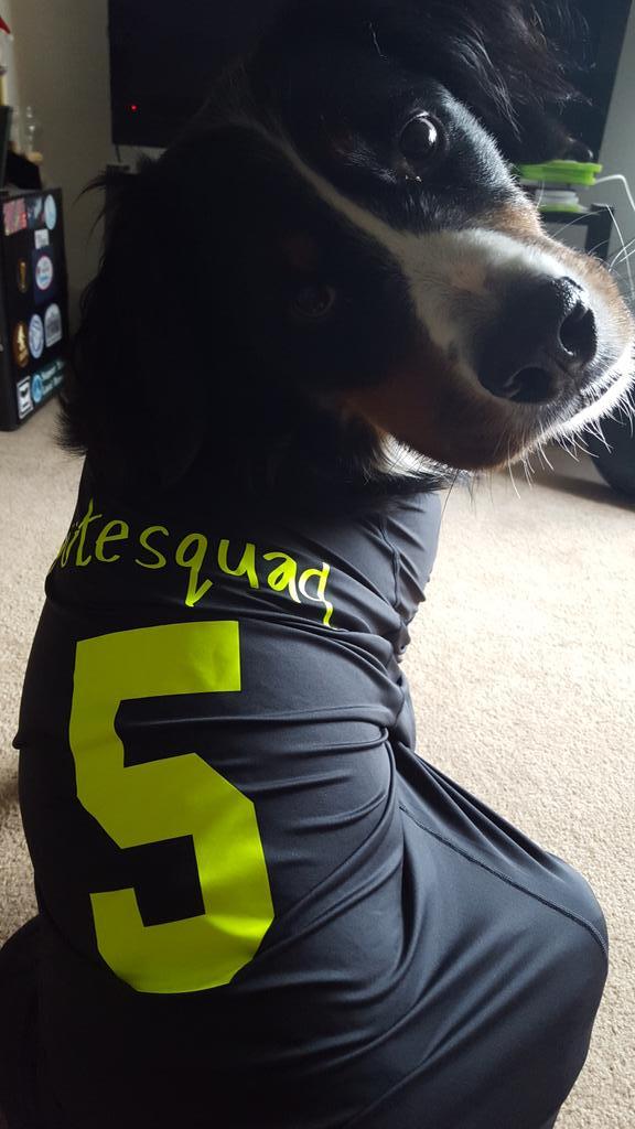 dogsquad2