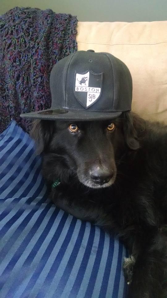 dogsquad4